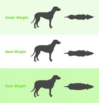 Dog-Weight-Chart-979x1024