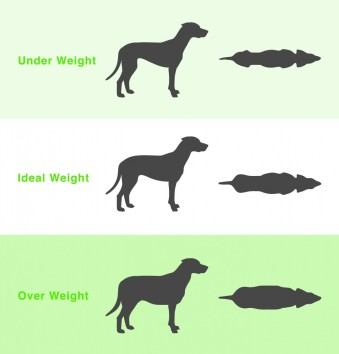Dog-Weight-Chart-979x1024